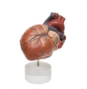 heart-1063962-m.jpg