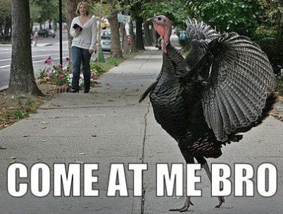 Turkey Day Preparation - An Engineer's Help Manual (humor)